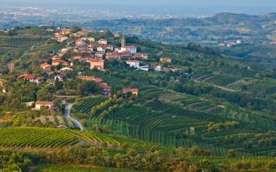 Wine Tour of Primorska region