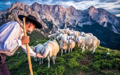 3 giorni di vacanza presso la fattoria Šenkova domačija dando il sale alle pecore