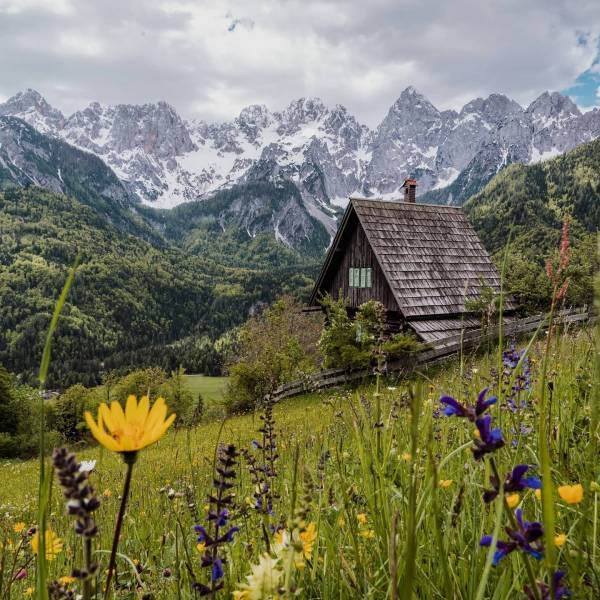 Up in the mountains, we go!  Good morning with a colourful palette of flowers and neverending views of mountain tops.  #ifeelsLOVEnia #mojaslovenija #sloveniaoutdoor #julianalps  Photo by @jorhut.