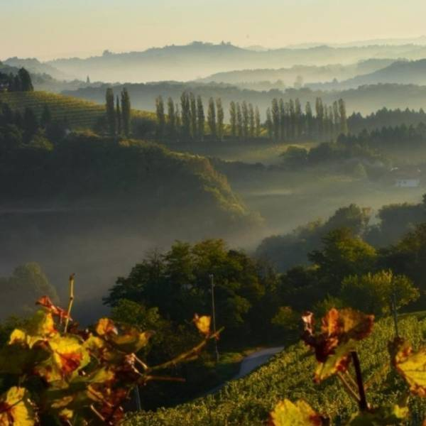 Wake up to the most beautiful sunrises - take a journey among vineyards.  Treat yourself to a trip to the wine region of Jeruzalem and taste exquisite local wines and culinary delights.  #ifeelsLOVEnia #mojaslovenija #sloveniaoutdoor   Photo by @tarasplanet.
