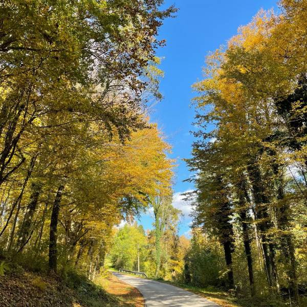 The sights you come across on a trip around Slovenia.   Drašiči, Bela krajina   #ifeelslovenia #mojaslovenija #belakrajina   Photos by @saramm_98