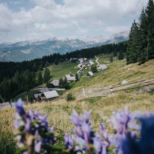 A great Wednesday  starts with a treasure view.   Planina Zajamniki A hidden wonder of Pokljuka Plateau • it's an alpine pasture with over two dozens wooden huts  and the Julian Alps as a backdrop. What a picturesque scenery • perfect for #hiking, #cycling and relaxing in nature.   #ifeelsLOVEnia #mojaslovenija #sloveniaoutdoor   Photo by @malaposastmici.
