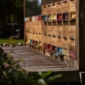 Soon #WORLDBEEDAY2021 Slovenia is a land of honey and bees. How well do you know them? Click to the link in the BIO.   #ifeelsLOVEnia #mojaslovenija  Photo by @mitja_kobal, Karata, www.slovenia.info