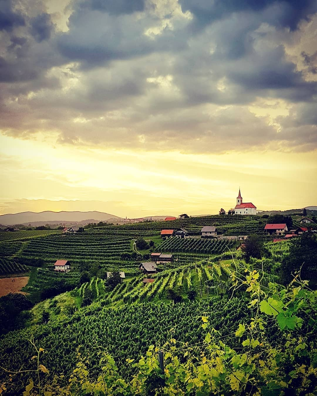Bela Krajina is one of the wine growing regions in Slovenia where landscape is defined by endless vineyards.  Thanks @sep_i for sharing your photo with #ifeelsLOVEnia.