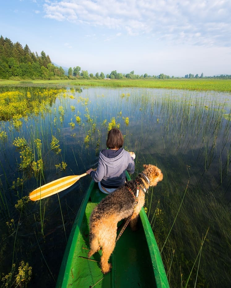 In spring the water level in intermittent Cerknica Lake is the highest and ideal for canoeing and other activities.  Thanks @matevzlavric for sharing your photo with #ifeelsLOVEnia.