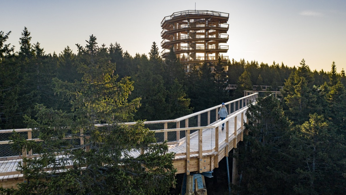 Pohorje Treetop Walk at Rogla to open to visitors soon