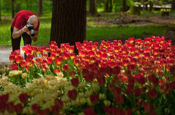 V Kamnik prihaja Igra rož
