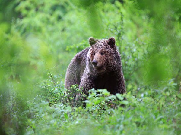 Projekt Nature & Wildife bo skrbel za razvoj zelenih produktov na območju Zelenega krasa